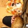 【小虎】小さな茶トラの怪獣 サムネイル6