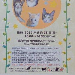 第一回【ΦωΦ】猫の里親譲渡会