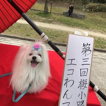 初めて京都の梅まつりわんマルシェに行った時のお写真
