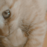毛繕いをするうちの茶トラ猫です
