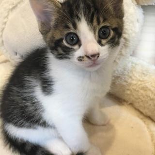 4/11生まれの元気な子猫の里親さんを募集します!