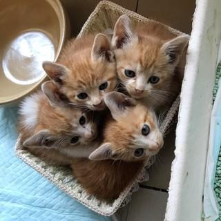 野良猫が産んだ4匹の子猫生後一が月半程度