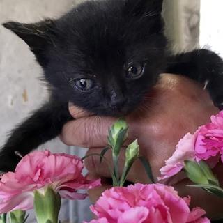 黒子猫ちゃん