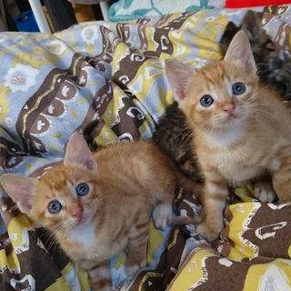 泉州より仔猫の里親さん募集★オス:2匹・メス:1匹