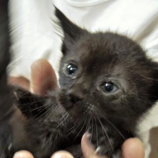 おだやかなキジトラの子猫