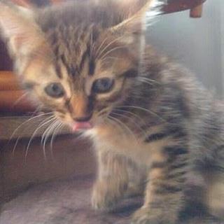 親子で捨てられていました。かわいい子猫たち!