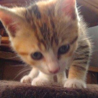 親子で捨てられていました!かわいい子猫たち(^^♪