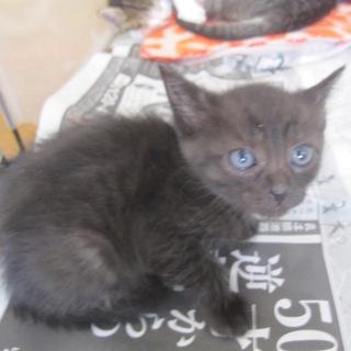 くりくりお目目の黒猫 ありえるちゃん 離乳中