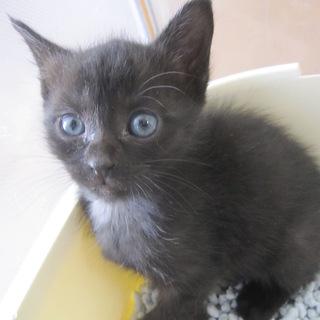 くりくりお目目の黒猫 じゃすみんちゃん 離乳中
