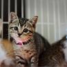瞳の大きな美猫【藤姫】