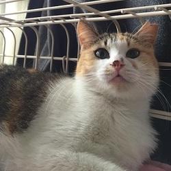 飼い主のいない猫とのお見合い会 八事 天道山・高照寺にて