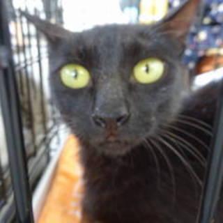 ヨーロッパで人気の黒猫♪写真写りが悪くて残念♪