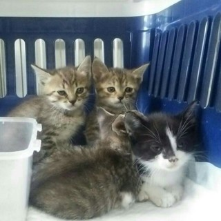 子猫達3兄妹!!収容されてます(>_<)
