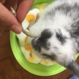 可愛い子ウサギ