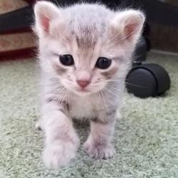 猫の里親探し