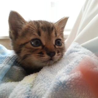 至急!!生まれて★1ヶ月の子猫★を保護しました