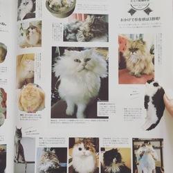 anan猫特集号に載りました!