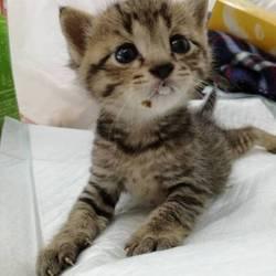 第25回 にゃん☆ぴーす子猫保護犬譲渡会 in  千葉市美浜区