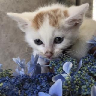 白茶子猫ちゃん