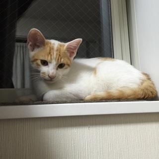 シロクン。2ヶ月です。兄弟で飼ってくださる方希望