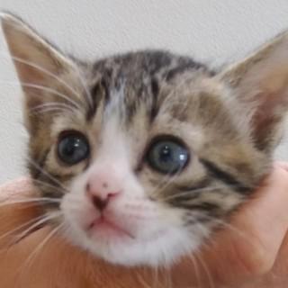 可愛い野良の子猫!4匹!