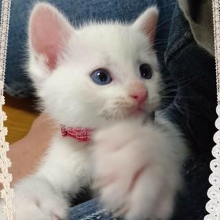 人馴れ抜群!超甘えたな白猫