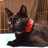 可愛い黒猫★牙チラ小悪魔★メス サムネイル3