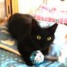 可愛い黒猫★牙チラ小悪魔★メス サムネイル4