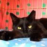 可愛い黒猫★牙チラ小悪魔★メス サムネイル5