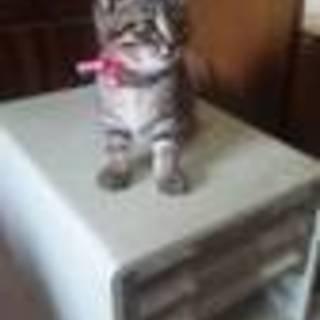 猫の里親さん募集です。