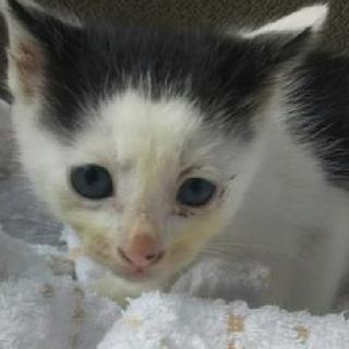可愛い白黒の猫ちゃん!期限5月29日迄!