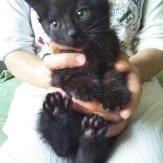 黒のおんなのこ 子猫
