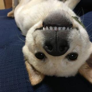 【元保健所】賢く飼いやすい甘えん坊MIX幼犬