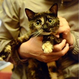丸顔丸目の美猫【おこげちゃん】