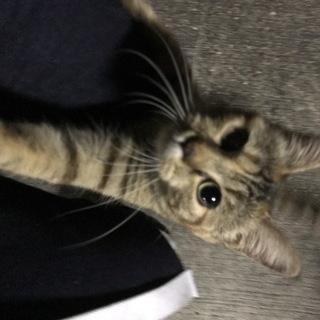人懐っこい野良猫ちゃん