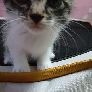 産まれて間もない子猫です。