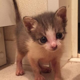 グレー白子猫ちゃん