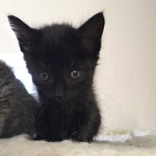 生後1カ月半♡黒猫女の子