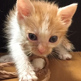 茶白子猫ちゃん