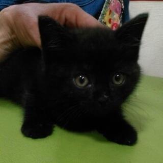 おめめが可愛い黒猫♪