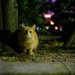 保護猫おからちゃんとの出会い