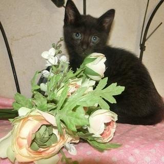 こずえ  生後8週  猫の方舟里親会に参加します。