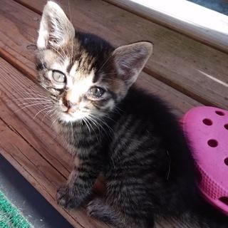 子猫1か月です。幼い命、助けてください!