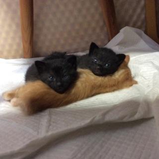 モフモフふわっふわの黒猫さん