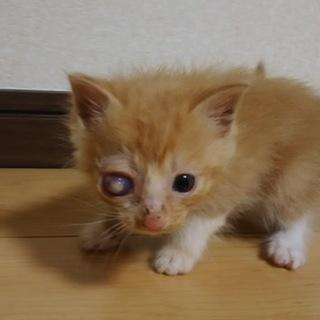 右目失明子猫