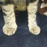 翠君の右足が腫れてる‼