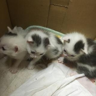 可愛い子猫!新しい家族探してます!