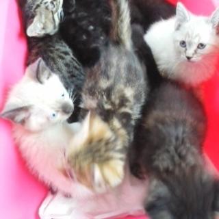 可愛い 子猫ちゃんたち たくさん います。