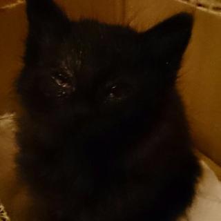 黒猫の仔猫ちゃん