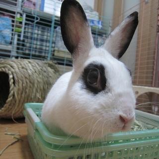 保護ウサギ・シロップちゃん